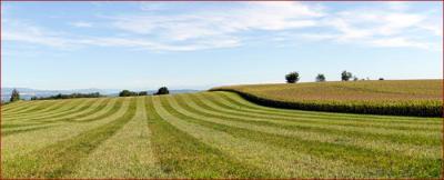 En zone agricole, un projet de construction ou d'installation doit permettre l'exercice ou le maintien d'une activité agricole, pastorale ou forestière significative