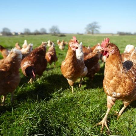 Ce que prévoit la loi « agriculture et alimentation » au sujet du bien être animal